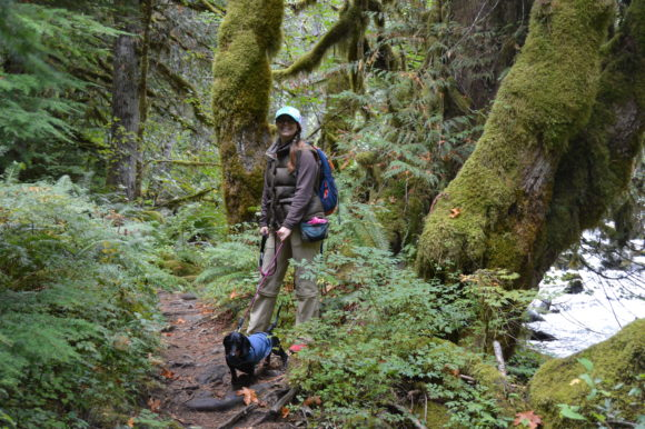 Salmon River Trail Hike: Dogs and Salmon Are Running