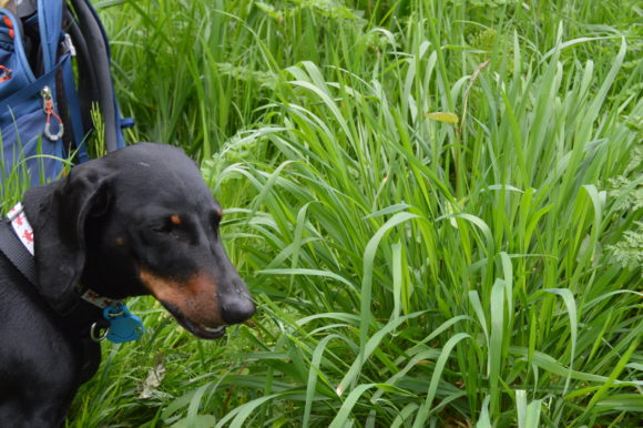Why Do Dogs Eat Grass? Lessons I've Learned…