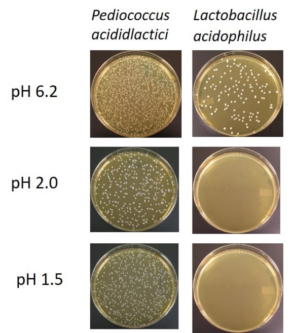 Petri Dish pH levels (1)