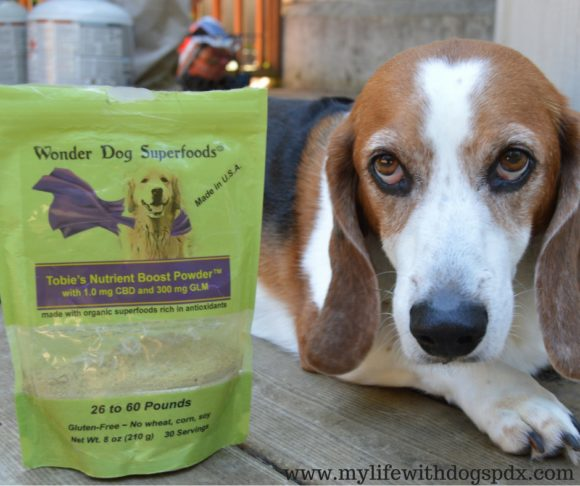 A Q&A with Wonder Dog Superfoods: Why Cannabidiol