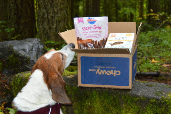 Chewy Fall Review: Rain is Back #Chewy Influencer