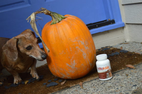 Halloween Is Stressful for Animals: How Probiotics Help & Safety Tips