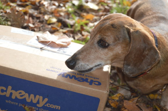 A Scary Chewy Review: Boo! #Chewy Influencer
