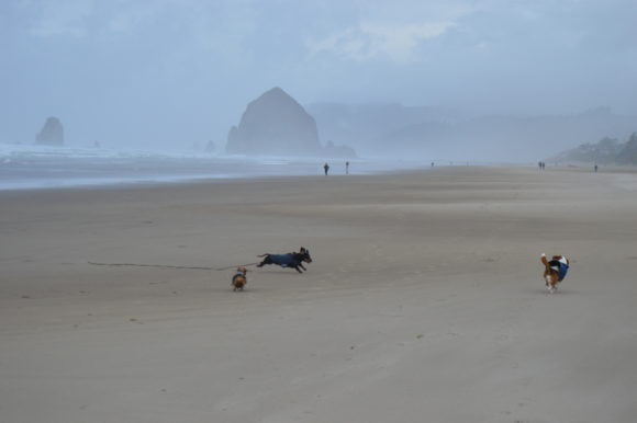 Wordless Wednesday: Haystack Rock