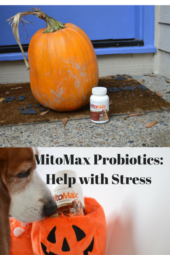 mitomax-probiotics-helps-with-stress
