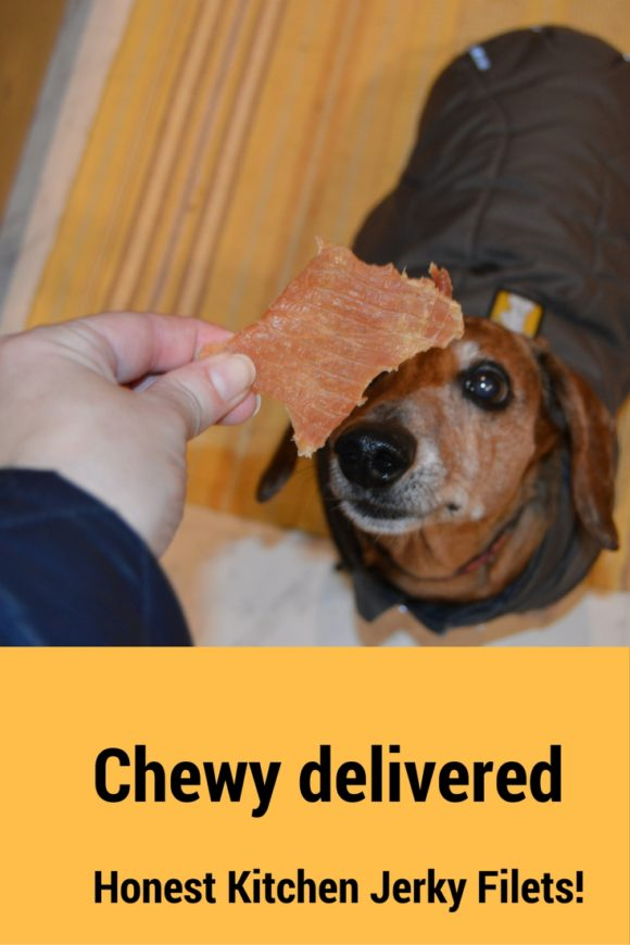 Chewy delivered