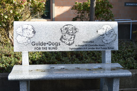 Guide Dogs for the Blind: A Campus Visit
