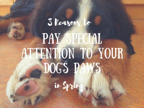 3 Reasons to Pay Special Attention to Your Dog's Paws in Spring