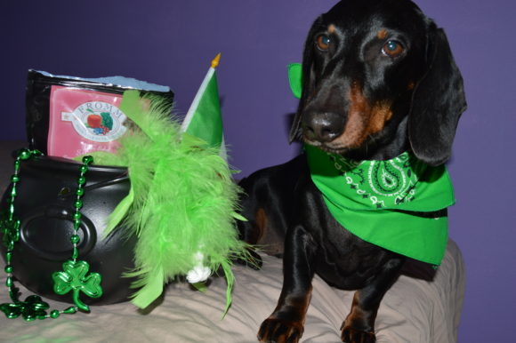 What do Chewy and St. Patty's Day Have in Common? Giveaway!
