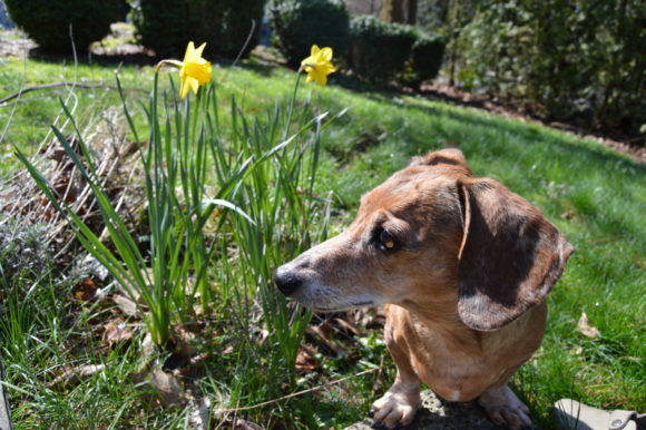 Senior Bruiser's Guide to Spring: A Checklist