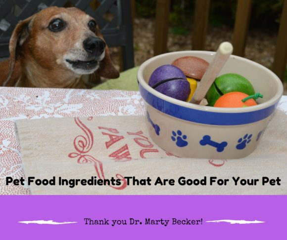 Choosing the Right Pet Foods: A Q&A with Dr. Marty Becker #ad