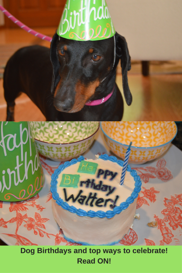 Dog Birthdays (2)