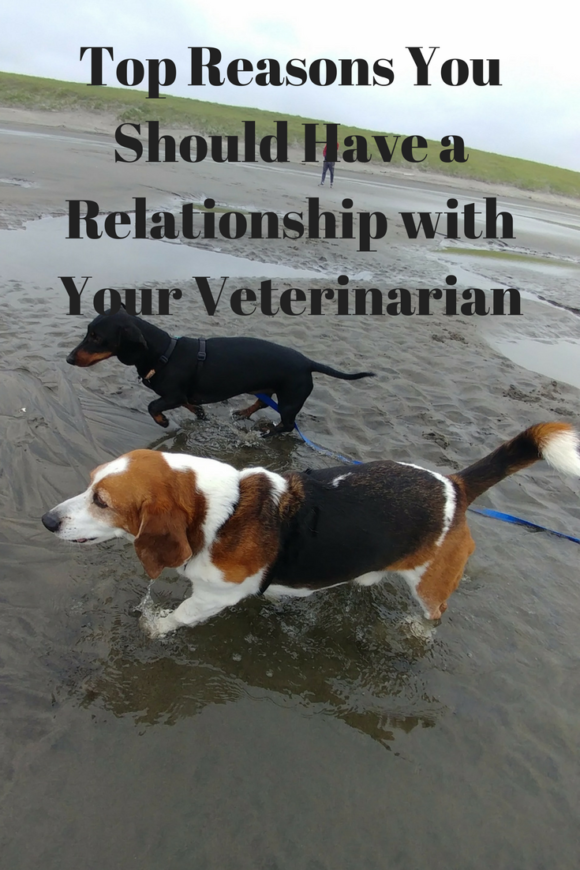 Top Reasons You Should Have a Relationship with Your Veterinarian (1)
