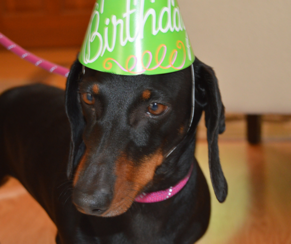 Top 3 Reasons To Celebrate Your Dog's Birthday