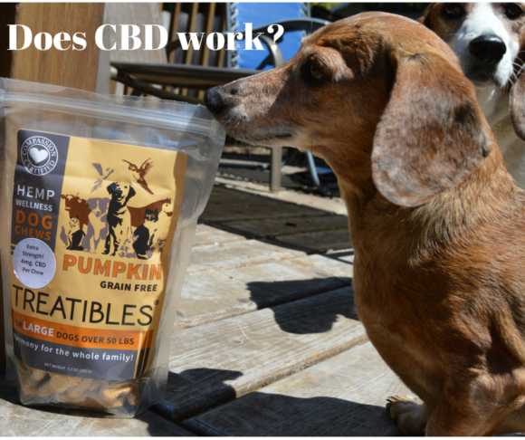 The Three R's: How CBD Is Helping Our Dogs #ad