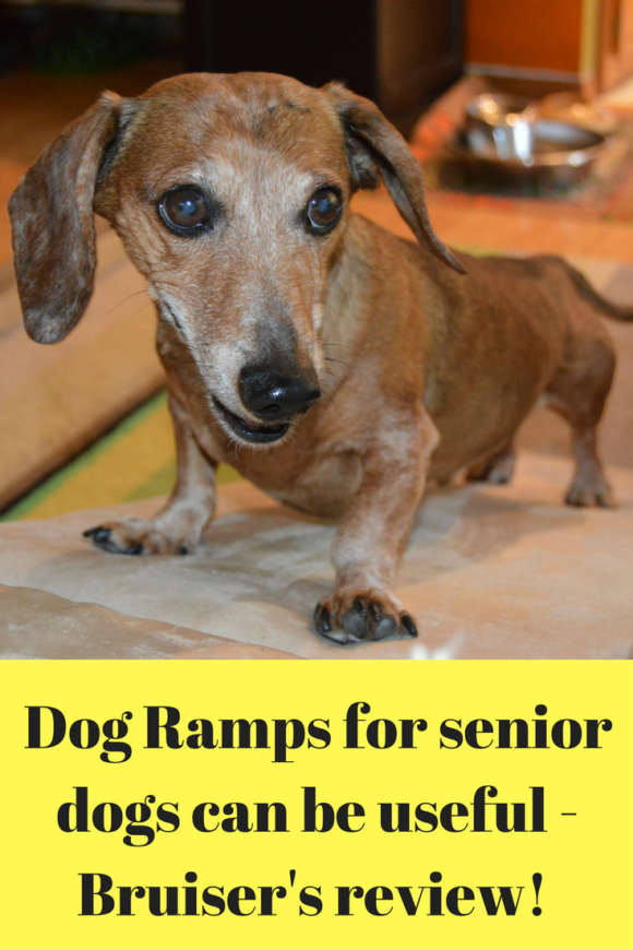 Dog Ramps for senior dogs can be useful! Add heading