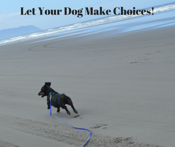 Let Your Dog Make Choices!