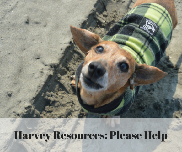 Animals Misplaced by Harvey: Where You Can Donate