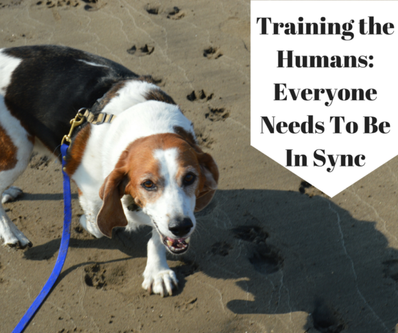 Training the Humans: Is Everyone On The Same Page?