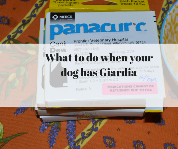 What to do when your dog has Giardia