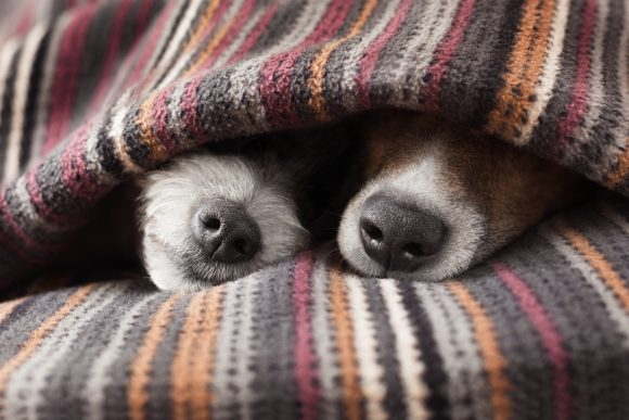 Guest Post: Should Your Dog Sleep with You in Bed?