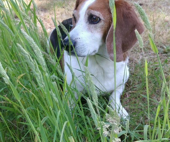 5 Important Country Living Lessons with Three City Hounds